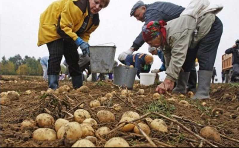 «Может закончиться летально»: Супрун сделала заявление о работе на огороде