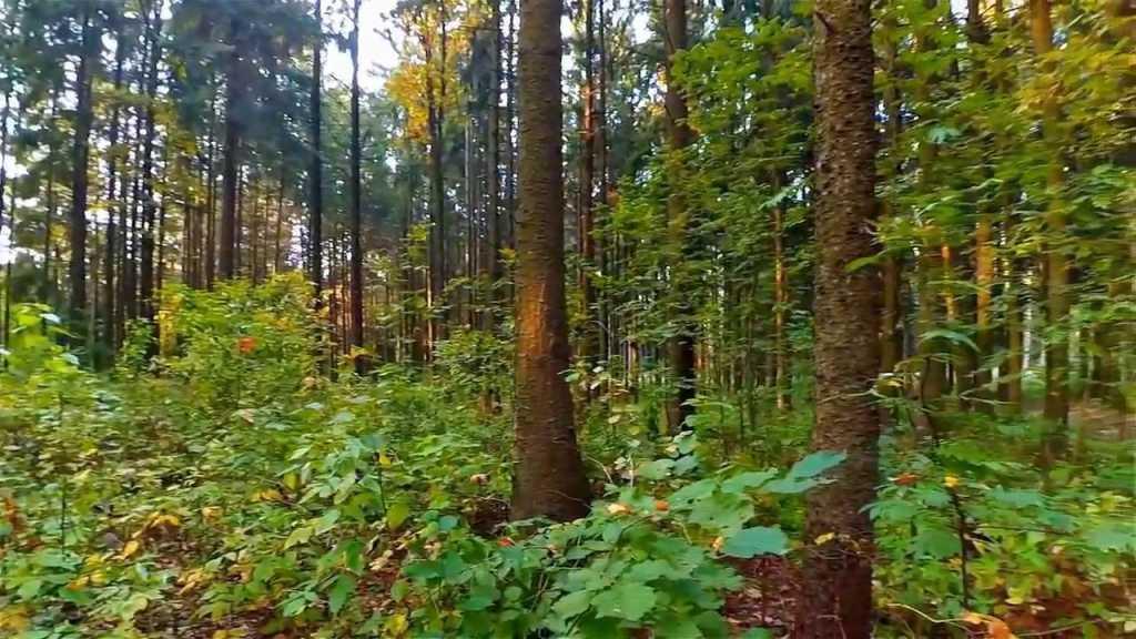 Пропал более недели назад: На Закарпатье нашли украинца, который потерялся в лесу