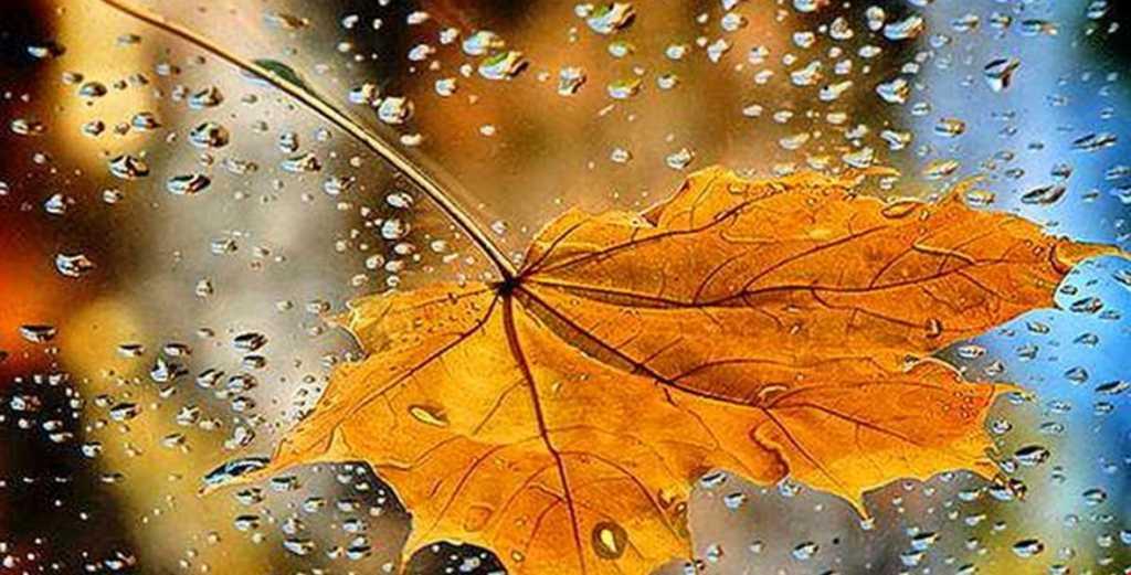 Осень набирает обороты: Синоптики рассказали, каких сюрпризов от погоды следует ожидать 7 сентября