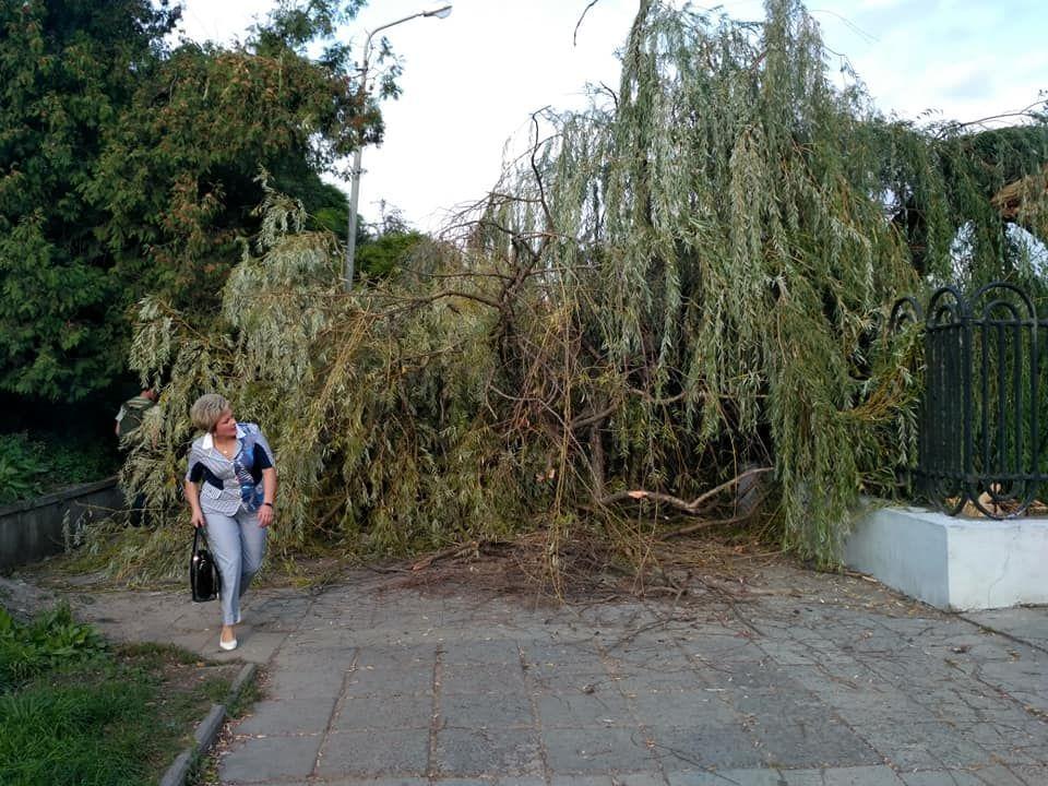 Поваленные деревья и разбиты остановки: во Львове штормовой ветер «наделал беды»
