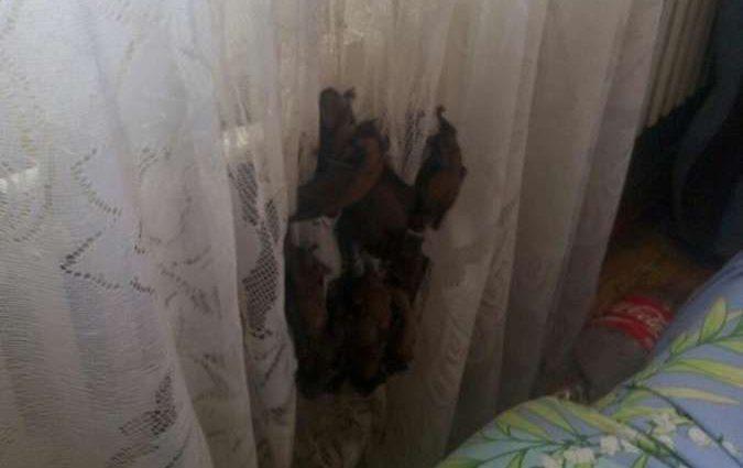 Атакуют десятками, невозможно окна открыть: Новая «напасть» на Харьковщине не дает людям спокойно жить