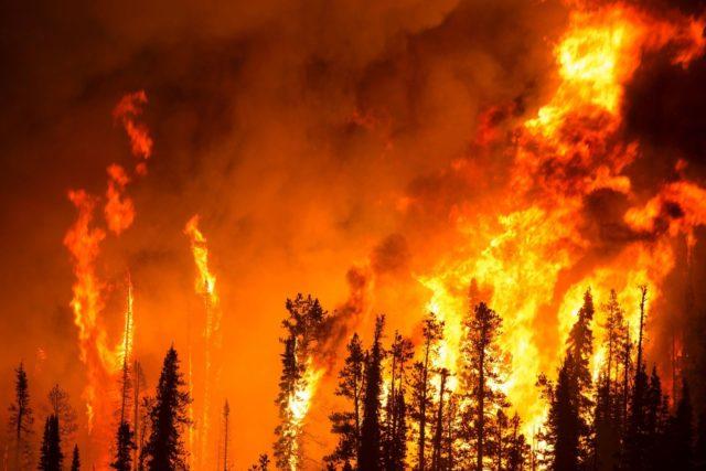 ЧП под Харьковом: вспыхнул масштабный пожар, первые подробности