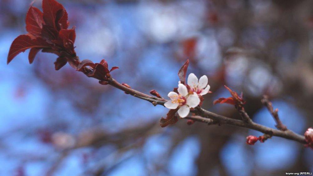 «Деревья расцветают, дети вернулись»: Показали Крым после экологической катастрофы
