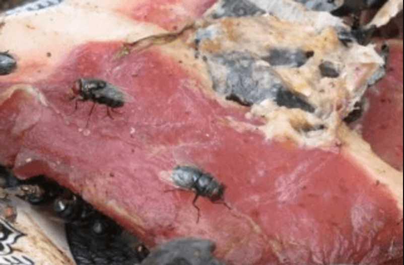 Хотели накормить детей гнилью: в детские сады Киева поставляли несвежее мясо