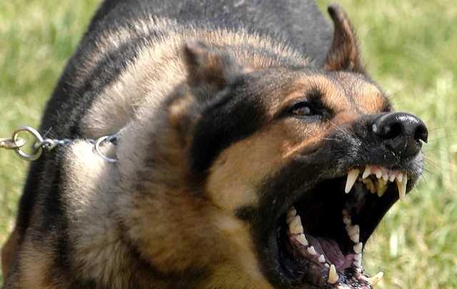 Трагедия в Харькове: на маленького ребенка набросилась сумасшедшая собака