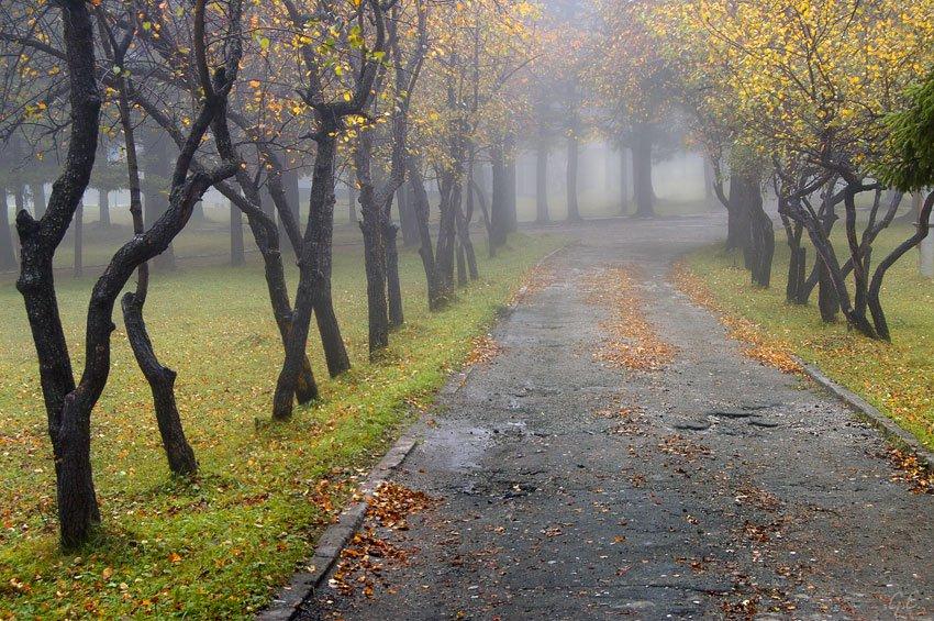 В Украину приближаются холода и дожди: Синоптики дали прогноз на 21 октября