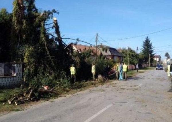 Разрушал дома и вырывал деревья: село возле Ужгорода разрушило торнадо