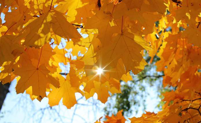 Бабье лето — в разгаре: Синоптики дали прогноз на 11 октября