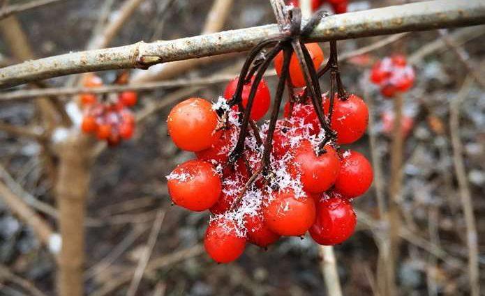 От 22 градусов тепла до заморозков и снега: Синоптики рассказали, каких сюрпризов от погоды следует ожидать украинцам 2 октября