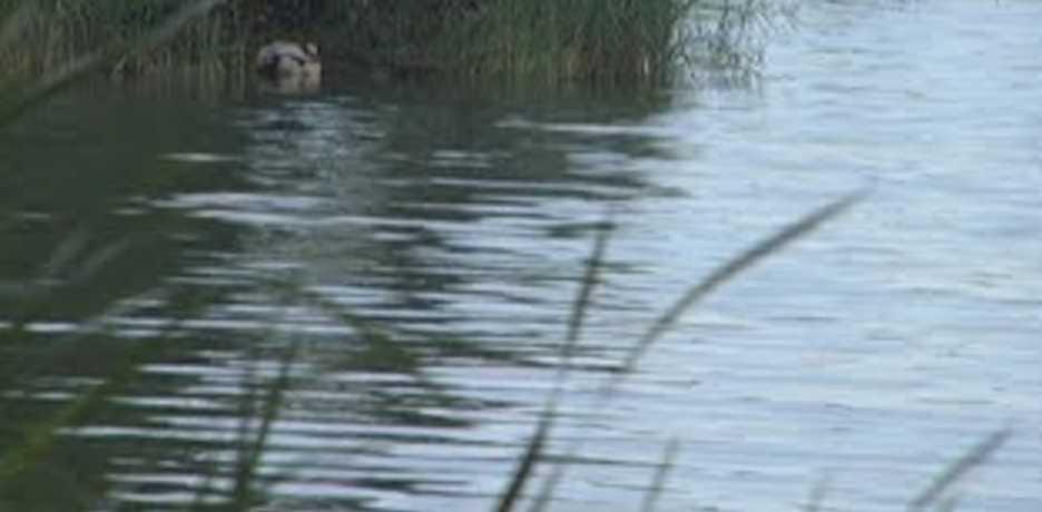 Утопила собственная мать? Тела пропавших в Киеве детей обнаружили в озере