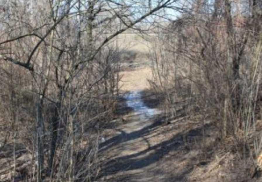 Лежала полураздетая под ветками: в лесу нашли тело без вести пропавшей женщины