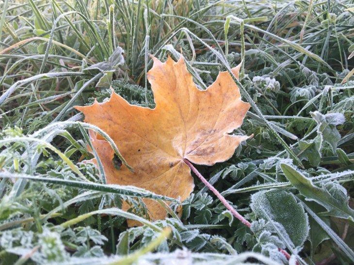 Холодно и кое-где уже снег: Прогноз погоды на 12 ноября