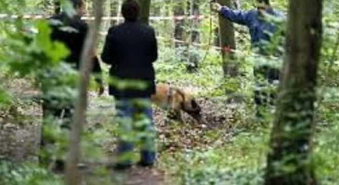 Ребенка разыскивали со вчерашнего вечера: В Харьковской области в лесополосе обнаружили израненное тело школьницы