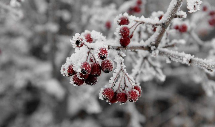 Мороз не отступает: Синоптики рассказали, каких сюрпризов от погоды следует ожидать 24 ноября