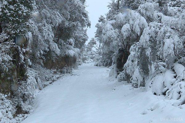 Снег, дождь, метель и наглая гололедица: Прогноз погоды на 12 декабря