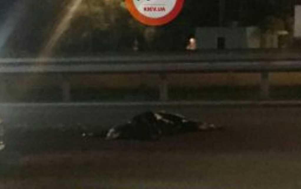 Женщину разорвало на куски: в Волынской области произошло смертельное ДТП (ФОТО)