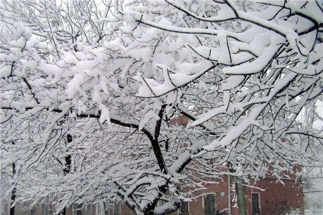 Небольшой «минус» и снег с дождем: Прогноз погоды на 16 января