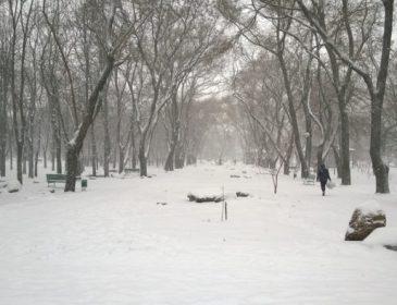 Тело молодого парня обнаружено в одесском парке: первые подробности трагедии