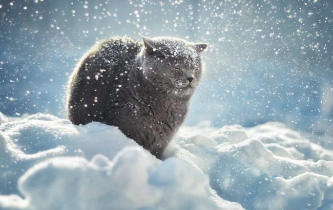 Каким будет последний день зимы? Погода по Украине