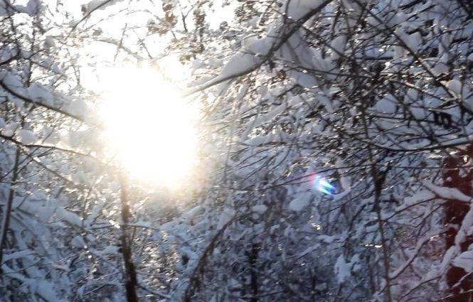 Февраль продолжается: Прогноз погоды на 25 февраля