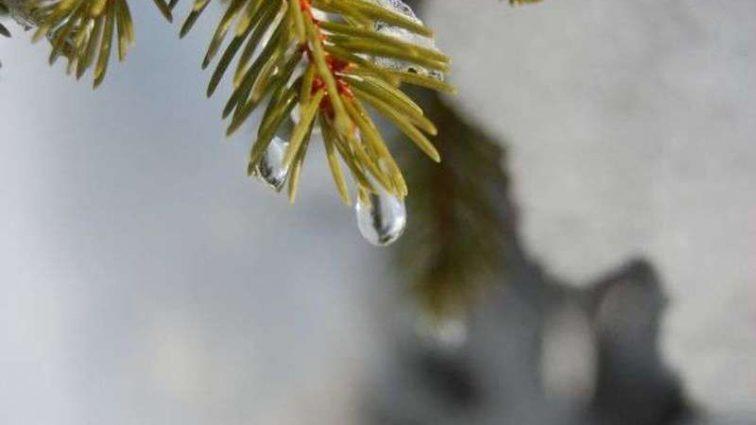 Зима продолжает удивлять: Прогноз погоды на 4 февраля