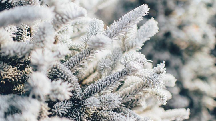 Зима медленно возвращается в Украину: Прогноз погоды на 5 февраля