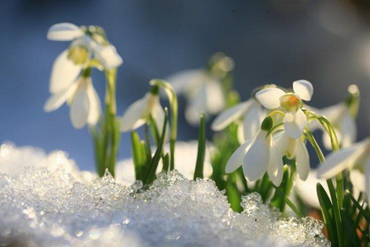 А за окном почти весна: какую погоду на ближайшие дни обещают синоптики в Украине
