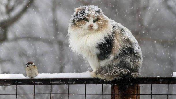 Возвращение зимы? Синоптики спрогнозировали ночные заморозки и мокрый снег