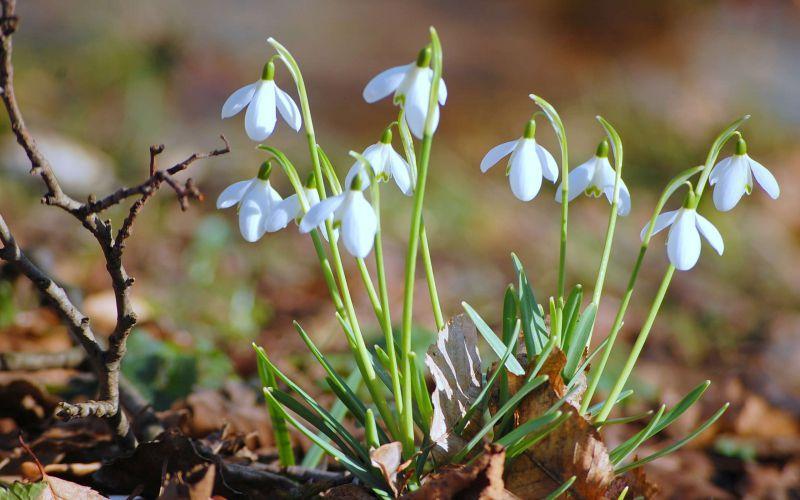 Настоящая весна: Синоптики завтра прогнозируют самый тёплый день марта
