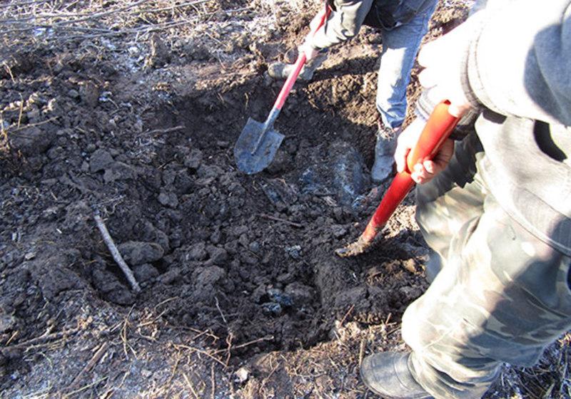 Тело вывез и закопал в поле: Во Львовской области мужчина жестоко убил родственника