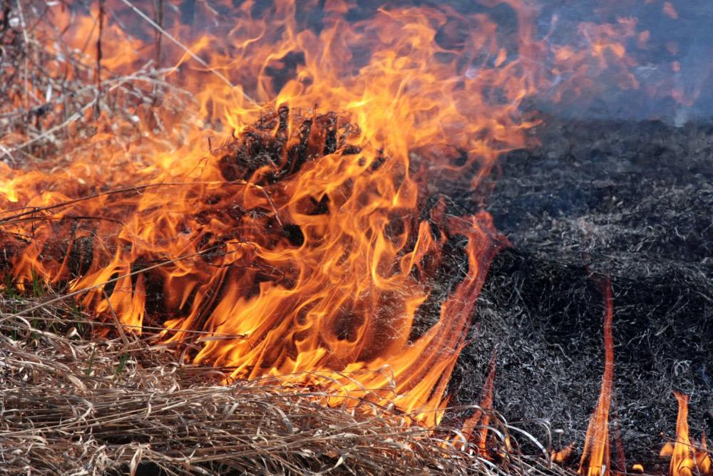 Хотели сжечь траву возле дома: На Житомирщине пожилые супруги сгорело живьем во время сжигания сухостоя