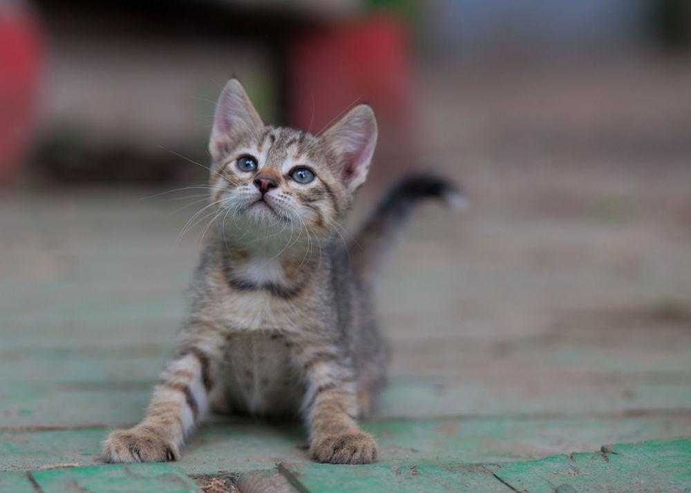 Наказан за доброту: В Киеве под колесами джипа погиб водитель, который пытался спасти котенка