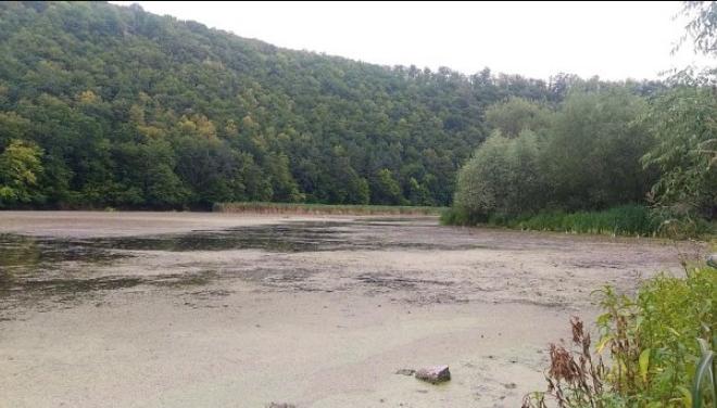 «Две недели пролежала в болоте»: На Ивано-Франковщине нашли пропавшую бабушку