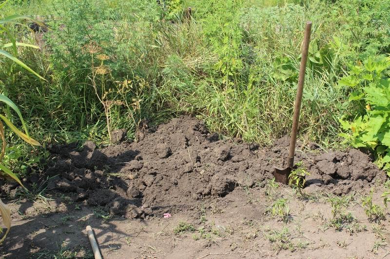 Родила дома и упаковала тело в коробку: На Волыни пограничница закопала собственного младенца на огороде