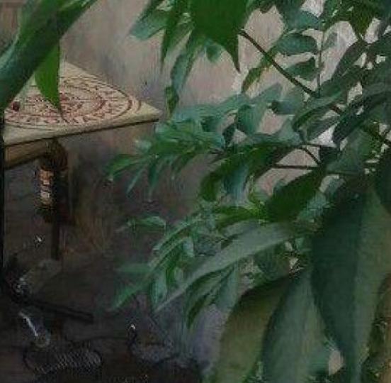 «Сделали «это» прямо на глазах у посетителей и прохожих»: нетрезвую парочку в Черновцах поймали на горячем
