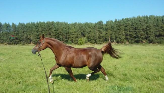 Поплатилась жизнью за глупость: в Харьковской области конь забил 14-летнюю девушку. Привязала себя за талию