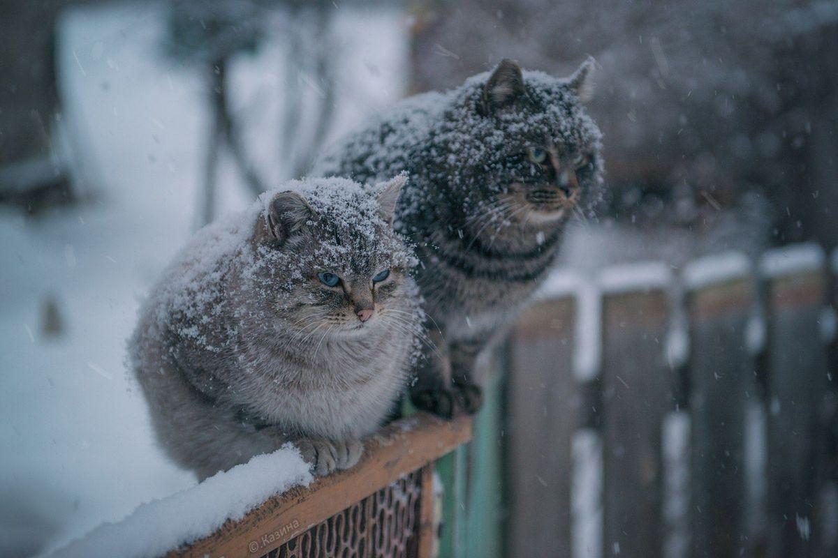 Сильный мороз и мокрый снег: «строгий» прогноз погоды на выходные