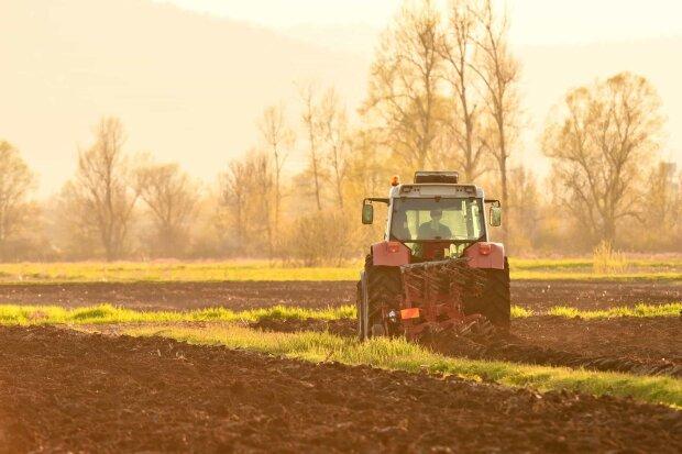 «В среднем $ 2200» : В Кабмине назвали стоимость гектара после открытия рынка земли