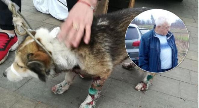 «Неужели на такое способен человек?»: чиновник поиздевался над своей собакой. Кадры увиденного доводят до слез