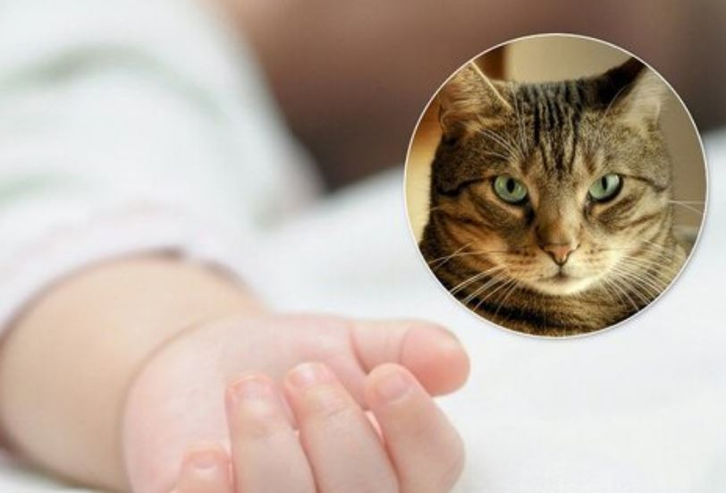 «Кот-убийца»: Трагическая смерть младенца на Винниччине. Мать просто отошла на несколько минут