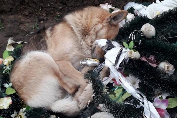 «Трудно спокойно смотреть»: трогательное фото собаки на могиле заставило плакать украинцев