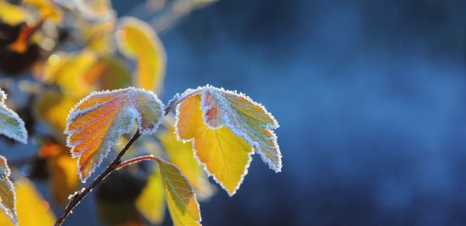 Аномальная погода. Синоптики шокировали прогнозом. Зимы не будет?
