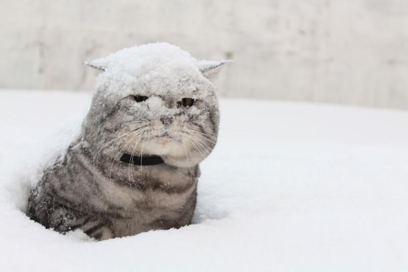 Мокрый снег, сильный ветер и дождь! Прогноз погоды на 22 января 2020 года